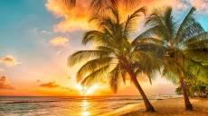 Barbadosa
