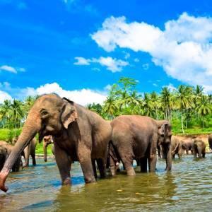 Atpūta Šrilankā