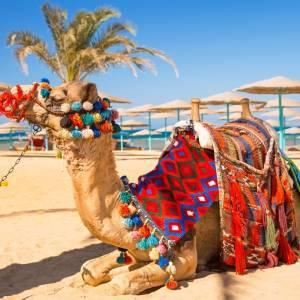 Ceļojums uz Ēģipti (Hurgadu)