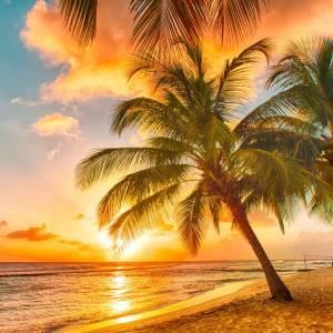 Mедовый месяц на Барбадосе
