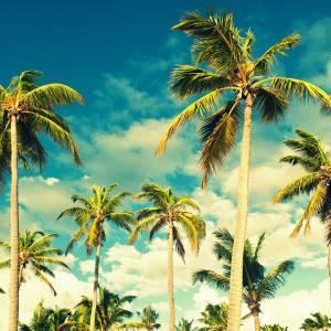 Kāzas Karību salās